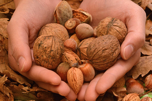 Eat Nuts To Prevent Diabetes And Heart Disease